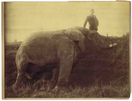 G110 JUMBO THE ELEPHANT MACABRE ORIGINAL PHOTO